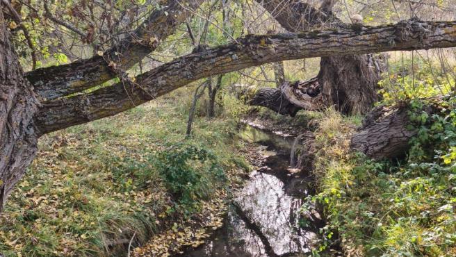 Camarena de la Sierra se adhiere al Corredor Biológico Mundial para difundir su riqueza natural en todo el mundo